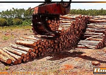 Garras de máquinas para floresta